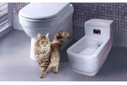 Гигиена туалета