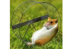 Фитнес для грызунов