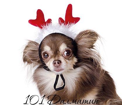 Аксессуар Рожки для собак