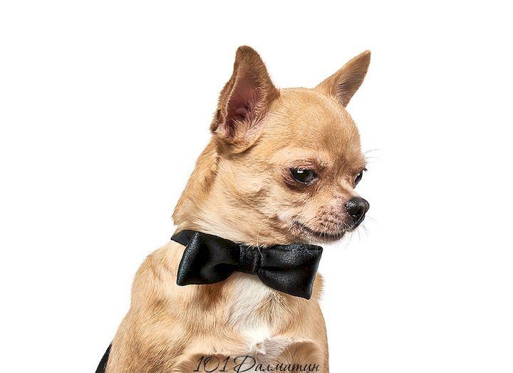 Аксессуар Бабочка для собак